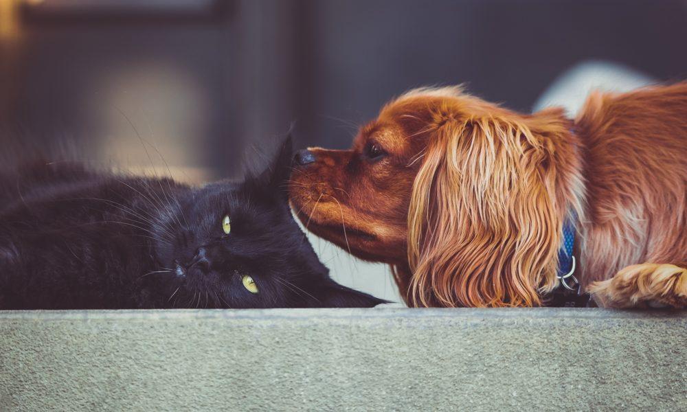 comment prendre soin de son animal été