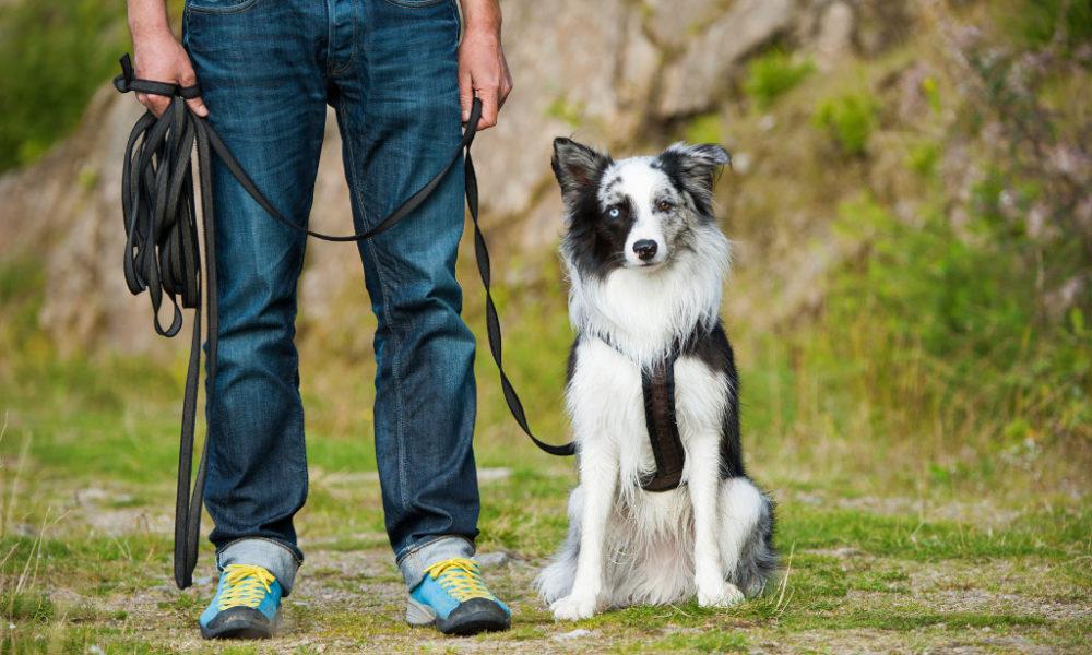 Un collier de dressage approprié pour avoir un chien obéissant